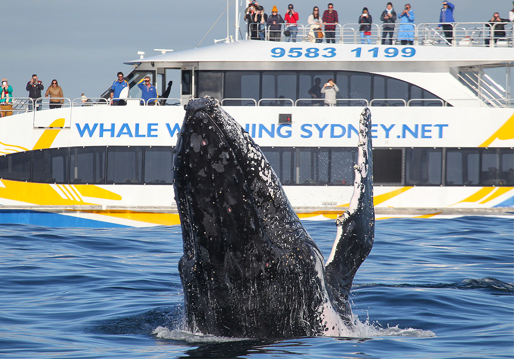 3hr Discovery Cruise, Ocean Dreaming 2, Whale Watching Sydney