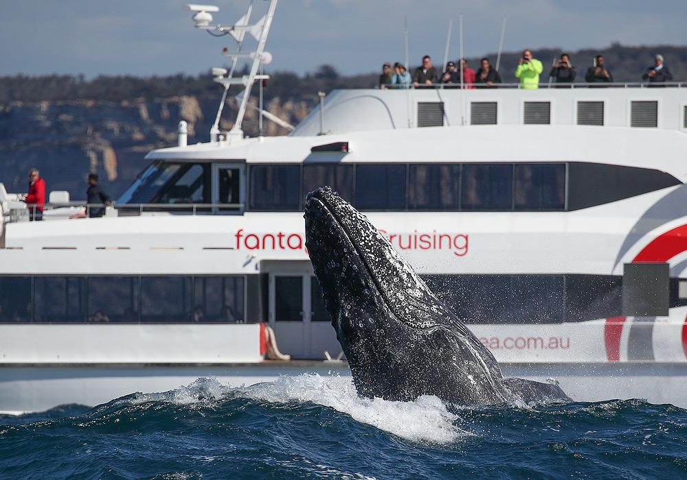 3hr Discovery Cruise,Fantasea Catalina, Whale Watching Sydney