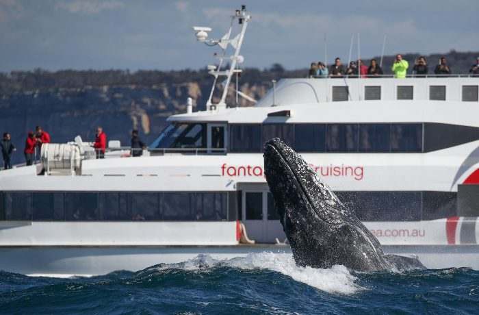 3hr Discovery Cruise, Whale Watching