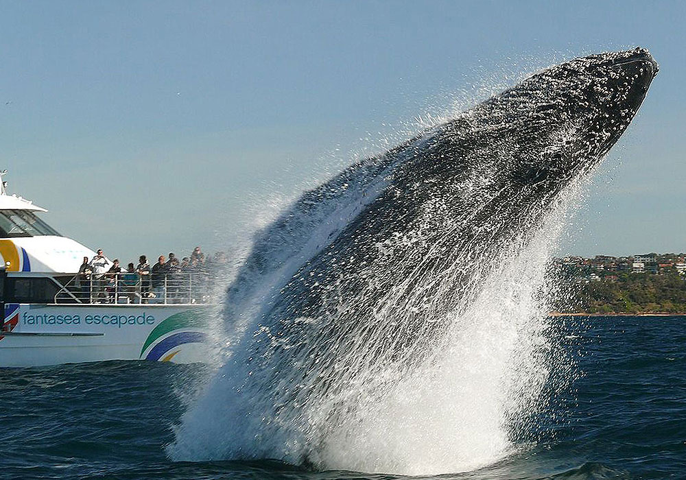 2hr Explorer Cruise, Fantasea Escapade, Whale Watching Sydney