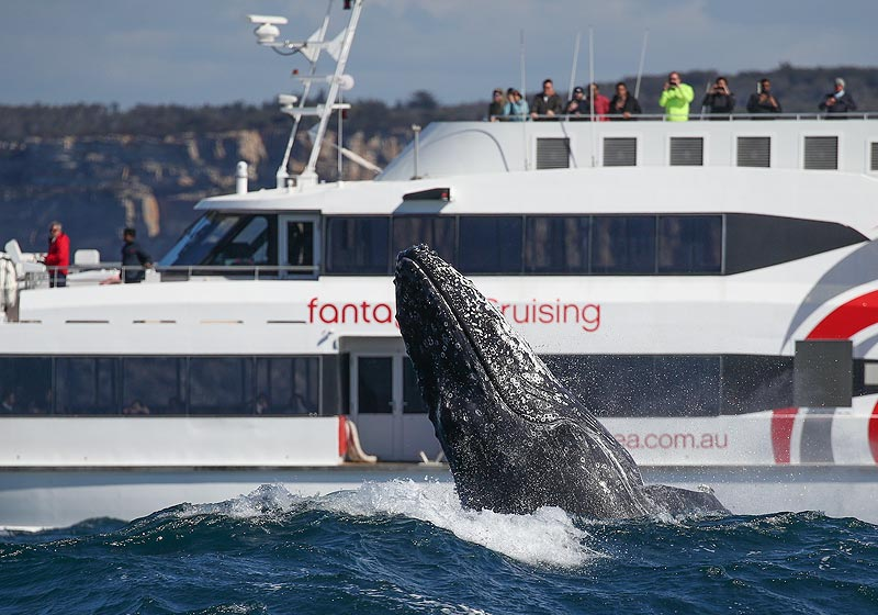Whale Watching, 2hr Express Cruise